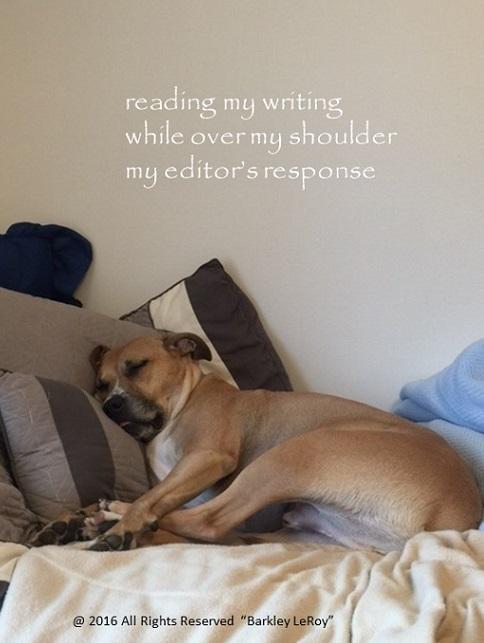 Barkley Editor