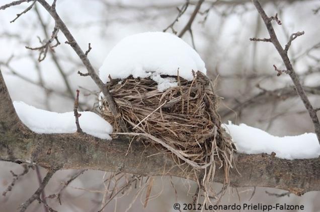 Leo Nest