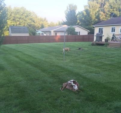 Perimeter Pups