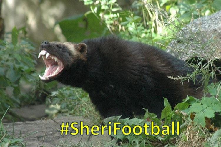 sherifootball2016