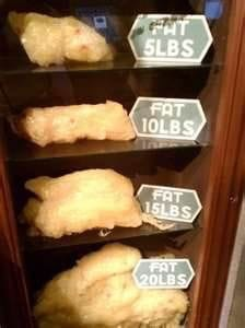Fat Meme