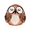 Blog - Owl Photo